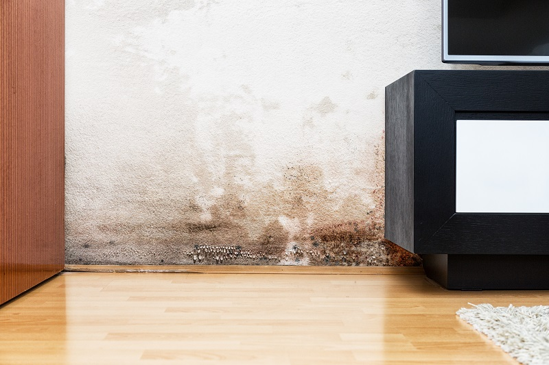 How to Remove Brown Mold from the Basement