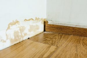 brown mold removal hanover pa