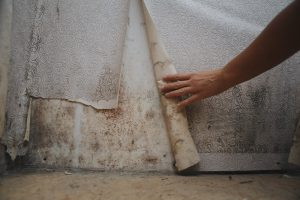 air purifiers help with mold allergies